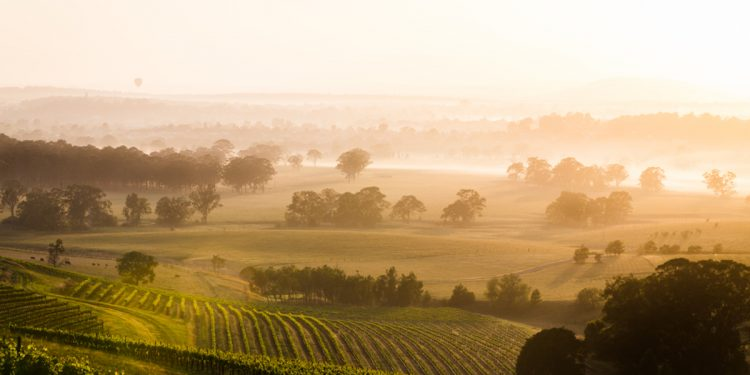 Hunter Valley New South Wales. Photographed by halans. Image via Shutterstock