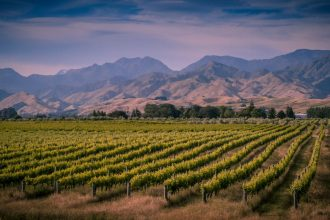 Marlborough New Zealand. Photographed by Rudmer Zwerver. Image via Shutterstock