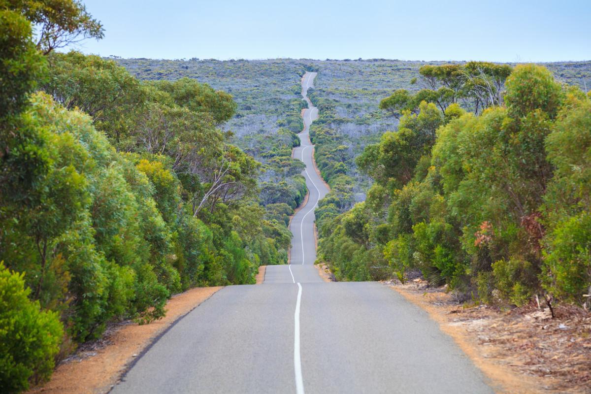 Road through Flinders Chase National Park on Kangaroo Island. Image: Rodrigo Lourezini
