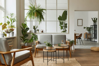 Australia's 10 Best and Easy Indoor Plants to Grow. Photographed by Followtheflow. Image via Shutterstock.