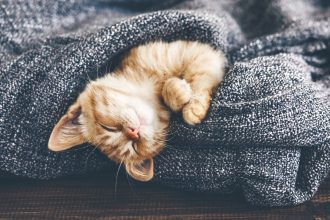 Cat Sleeping Warm Winter Cute. Photographed by Alena Ozerova. Sourced via Shutterstock