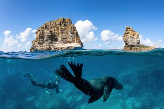 Man swimming with a seal during a snorkelling tour with Dive Jervis Bay. Image: Jordan Robins