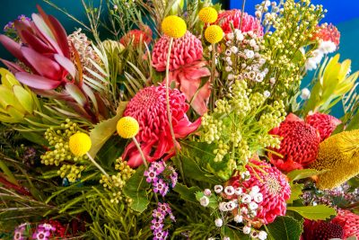 Australian Native Flowers. Photographed by Daniela Constantinescu. Sourced via Shutterstock