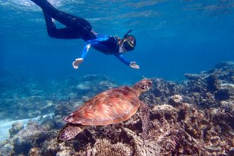 Snorkeller with turtle, Ningaloo Reef. Photographed by Emily Hamley. Image via Shutterstock