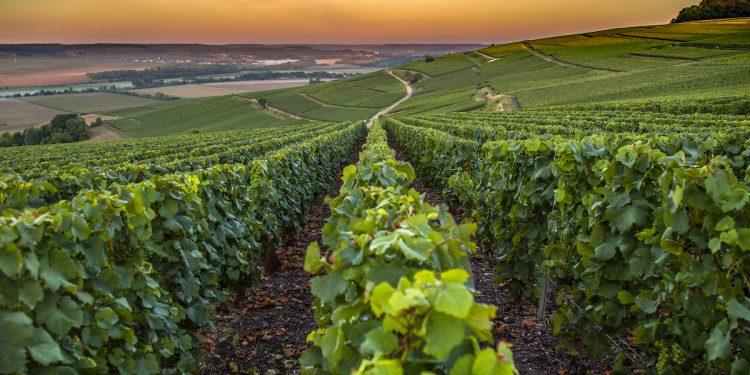 Champagne France. Photographed by Hesam Sanaee. Image via Shutterstock