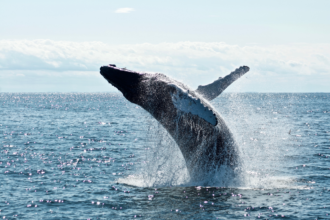 Top 10 Spots for Whale Watching in Australia in 2021. Photographed by Todd Cravens. Image Supplied via Unsplash.